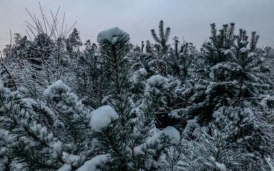 9 Ideen für einen entspannt-entschleunigten (aber wunderbaren!) Dezember